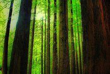 Oh, the wonderful trees! / by Tarra Ennis