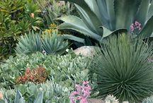 piante grasse / by Marina Musi