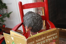 Chickens & their Coops / by Judy Hoover