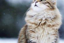 Cats. Got to love 'em / by Ashlyn Hill