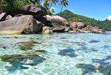 Tropical paradise / by Corrie Lynn