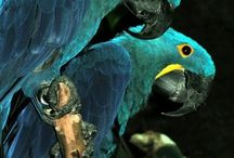 Perroquet - Toucan / by Mary Kay