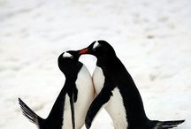 Penguins / by The Literacy Company