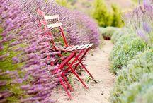 Spring / by Patrizia Malomo