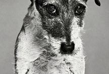 Rotten dogs / by Barbara Baker