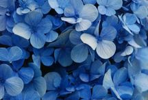 Shades of Blue / by Valerie Pettit
