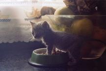 Cute!  / by Lizzy Lizarraga