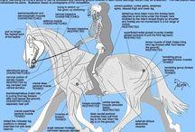 Other Stuff / by HorseTackOnline.com