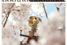 Squirrels / by Pam Angel