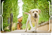 V.I.P. - Very Important Pets / The pampered life of the Jet Set Pet - Auberge Resorts pampers pets with the ultimate in special treatment, our four legged guests enjoy luxurious pet beds, distinctive services and special treats throughout their stay. / by Auberge Resorts