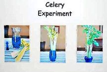Kiddo Science Experiments / by Jennifer Rodriguez