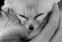 my true love animals / by Tiffany Aquila
