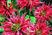Flowers I love in my Garden / by Kim Steeves