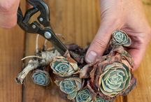 Gardening - cuttings / by ~ Janette ~
