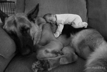 German Shepherds / I have a German Shepherd and love her to pieces :)  / by Ana S