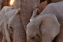 Elephants / by Jessie