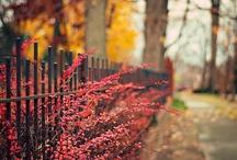 Autumn / by Kristi Tilman
