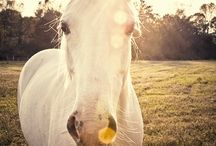 Horses / by Margeaux