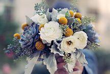 Colour Crush - Succulent Tones / by Botanical PaperWorks
