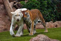 animals / by Leslie Matthews