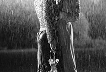 Kiss me..... / by mel layman