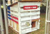 Chicken Coops / by Barb Lojwaniuk