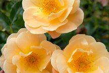 Summer Garden 2014 / by Laurie Routt