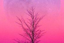 Moon, sun, & stars / by Judy Trickey