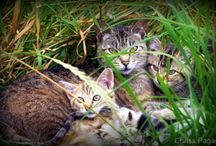 Feral Cats / by Cat Wisdom 101