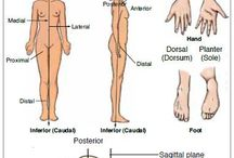 Anatomy & Physiology / by ~Tommie~