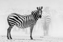 LIFE IN COLOR : BLACK AND WHITE / by María Inés Pinardi