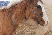 Animal rescue/ goodworks / by ErleandMarybeth Miller