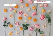 Beautiful Blooms / by Kelly Hunt {Eat Yourself Skinny}