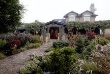 Gardening/Backyard / by Tory Lynne Gray