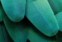 Teal, green and turquoise , the Colours of my Dreams. / by Wendy Strumpher