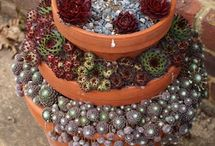 Semps and Succulents / by Susan Leishman