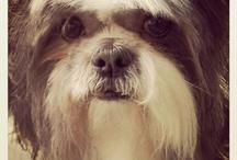 Cookie look alikes / by Vicki Rothmeyer