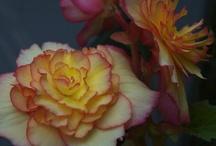 gardening / by Lourdes Cal