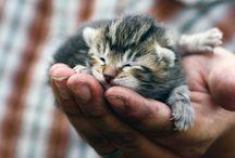 Cats................ / by Ketrah Sunkel