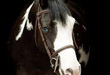 Horses<!3 / by Lauren Hipke
