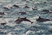 The seas and it's beauty! / by Paloma de Broun