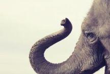 Animals! / by Ashley Kalbrunner