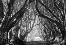 Trees / by Deb Bahr