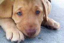 Innocent, Beautiful Puppy Love<3 / by Kalyn Wendholt