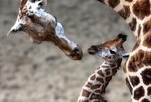 Cute Animals / by Kayla Slade