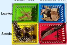 Teaching- Science Activities / by Lyndsey Sanders
