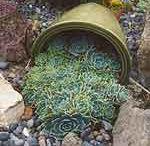 succulents / by Online Interior Design