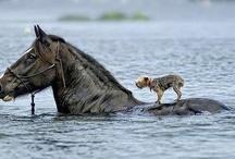 Animals / by smurf lover