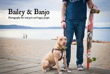 Bailey & Banjo / Photography for cool pets and happy people!  Come see us on Facebook facebook.com/baileyandbanjo / by Julie Clegg