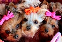 Cute Animals / Erika T. / by Erika Quiroz Daza